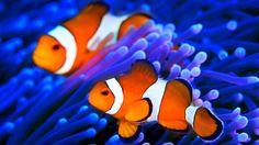 Canadauence TV: AO VIVO Imagens de Aquário no Oceano, assista