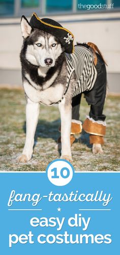 Get Fido and Tigger ready for Halloween with these easy DIY pet costumes! From cute to silly, these pet costumes are simple to make. Dog Pirate Costume, Costumes You Can Make At Home, Pet Costumes For Dogs, Easy Diy Costumes, Costume Ideas, Dog Clothes Patterns, Halloween Kostüm, Halloween Costumes, Dog Harness
