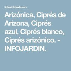 Arizónica, Ciprés de Arizona, Ciprés azul, Ciprés blanco, Ciprés arizónico. - INFOJARDIN.