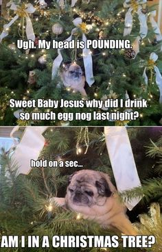 Drunk Pug