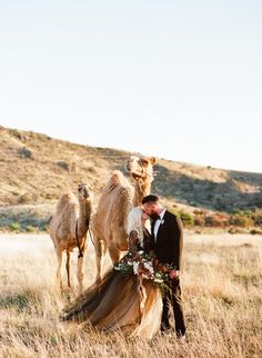 You guys, it's not often you get to shoot in the desert with CAMELS. Sometimes, as a creative, I find it super refreshing to relax and shoot for fun. This desert shoot was just that, and I just loved how it turned out! Camels, Black Gold, Deserts, Wedding Inspiration, Warm, Fun, Animals, Style, Animais