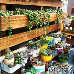 Pin by Beatriz Avila on jardín Succulents In Containers, Planting Succulents, Pink Succulent, Garden Terrarium, Succulent Arrangements, Concrete Planters, Garden Trees, Plant Decor, Garden Planning
