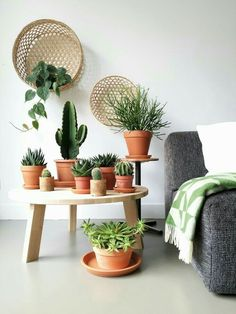 Körbe als Wanddekoration - super Trendy und kombiniert mit Kakteen, Sukkulenten. - Suja - Welcome to the World of Decor! Decoration Cactus, Home Decoration, Jungle Vibes, Cacti And Succulents, Hanging Succulents, Cactus Plants, Plant Decor, Home And Living, Living Room