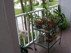 Front deck with orchids & other plant babies