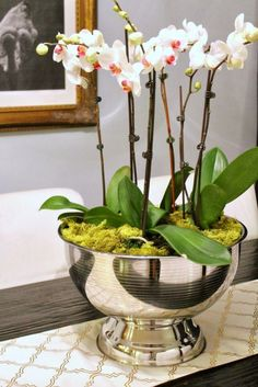 Orchids potted in a large silver punch bowl