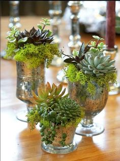 Indoor Gardening suculentas - Because succulents come in so many different shapes, sizes and colors, it's easy to decorate with them! For some clever ways to incorporate them in your home's decor, take a look at these indoor succulent container ideas! Succulent Centerpieces, Succulent Arrangements, Wedding Table Centerpieces, Floral Arrangements, Centerpiece Ideas, Wedding Decorations, Table Decorations, Glass Centerpieces, Succulent Table Decor
