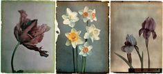 Leendert Blok dedicated his life to photographing 1920s botany (Silent Beauties)