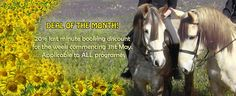 Andalusian horse. Dressage in spain. Trail riding. Discount. Dream holiday