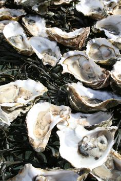 My seafood obsession... Fresh Oysters on the half shell... Yes, please!!!