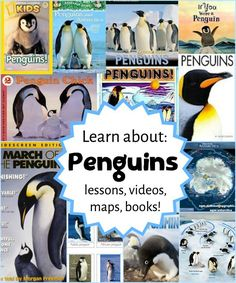 Project based learning kindergarten - Learn about Penguins! Educational Resources for Parents and Teachers – Project based learning kindergarten Penguin Facts, Penguin Life, Penguin Books, Penguin Research, Artic Animals, Kindergarten Learning, Learning Activities, Thematic Units, Fiction And Nonfiction