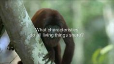 A short 3.6 minute visually stunning introductory trailer choreographed to powerful music that introduces the viewer/student to the characteristics that all life on Earth shares. I made this for use by teachers of Biology and the Life Sciences as an introduction to the wonders of life and the amazing characteristics that we all possess. As a High School Biology teacher myself, I have found these videos a great way to capture student interest immediately.Look for other Biology HD Introductory…