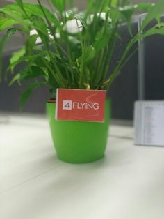 @4flying here at #4Flying we are #green #inside!