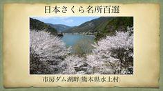 【(Japan)日本さくら名所百選】市房ダム湖畔(熊本県水上村)[Beautiful cherry blossoms in Japan]