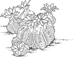 Illustration cactus Aztekium Ritteri Cactus