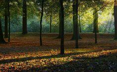 Deciduous Forest HD Wallpaper