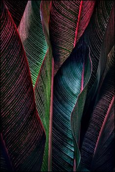 beauty of leaves color and texture Patterns In Nature, Textures Patterns, Color Patterns, Nature Pattern, Print Patterns, Pattern Print, Belle Photo, Color Inspiration, Painting Inspiration