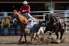 Calgary's own Lee Graves in the middle of grappling his steer on the way to the Steer Wrestling champion title with a time of 3.8 seconds.