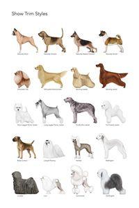 Pet Trim Style Posters https://www.facebook.com/bubblesandbarks