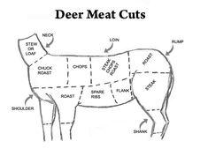 deer processing cuts skeletal cutting diagram as part of our  : venison cuts diagram - findchart.co