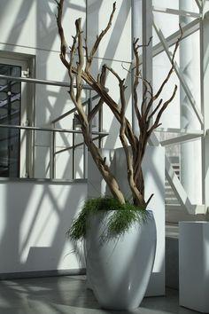 Die 75 besten bilder von rent a plant pflanzen zum for Innendekorateur mieten