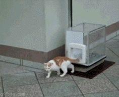 gatos afortunados 14
