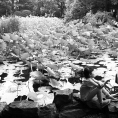 Lily and the water lilys' #bw #shanghai #china
