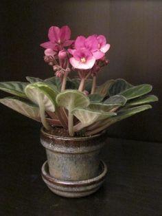 Veja dicas para sua violeta durar muito mais | Jardim das Ideias STIHL - Dicas de jardinagem e paisagismo