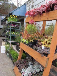 Madison Park, Seattle florist