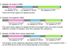 DNA fingerprinting Dna Fingerprinting, Image Caption, Forensics, Teaching Materials, Life Science, Evolution, Montessori, Biology
