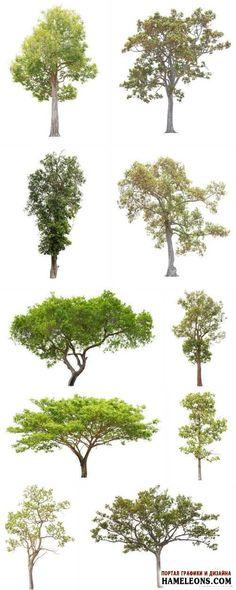 В растре деревья с зеленой кроной на белом фоне | Tree Isolated