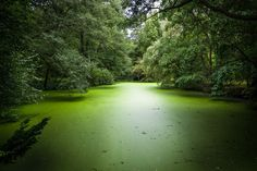Green Lake by Food with a View - Berlin Food & Photography on 500px