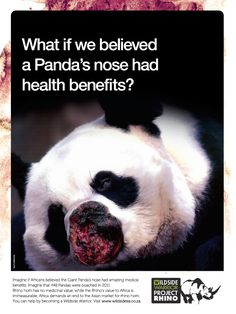 What if people started poaching pandas? China would be up in arms. Yet they have zero qualms about needlessly killing animals native to other countries. Panda China, Stop Animal Cruelty, Create Awareness, All Gods Creatures, Animal Welfare, Animal Rights, Panda Bear, Animals Beautiful, Wonders Of The World