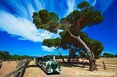 Safari Park, National Park Brijuni Islands, Croatia
