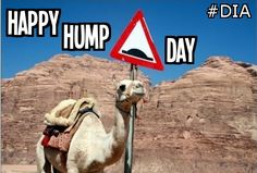 #HappyHumpDay #DIA #drivinginstructor