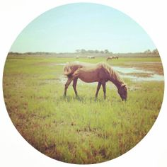 8x8 INSTANT Download Printable Horse Pony Close-Up Photography
