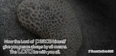 Now may the Lord of peace always grant you peace in every circumstance. The Lord be with you all - 2 Thessalonians 2 Thessalonians 3, Favorite Bible Verses, Lord, Internet, Peace, Learning, Free, Studying, Teaching
