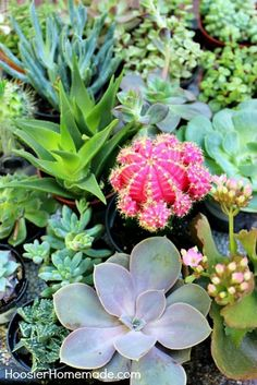 Succulents are all the rage now! They are SUPER easy to plant and take care of! Learn how to build and plant your own Succulent Garden with these step-by-step photos and instructions!