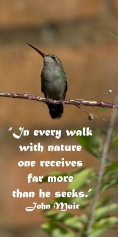 """In every walk with nature one receives far more than he seeks."" John Muir – On image of hummingbird in Tucson, Southeast Arizona Nature Quotes, Me Quotes, Memories Quotes, Garden Quotes, Wedding Quotes, Wedding Vows, John Muir, Deep, Happy Thoughts"