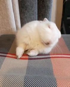 Funny Animal Jokes, Funny Animal Videos, Cute Funny Animals, Funny Animal Pictures, Cute Baby Animals, Animals And Pets, Pet Bunny Rabbits, Baby Squirrel, Pet Rabbit