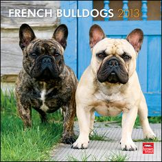 French Bulldogs Wall Calendar: Small and sturdy, French Bulldogs are sweet, mild-mannered animals. Though they are known to be jokesters, these dogs are alert and remarkably intelligent. As such, they make very good watchdogs. However, considering their sense of humor and their affectionate nature, they are first and foremost loving companions.  $14.99  http://calendars.com/French-Bulldogs/French-Bulldogs-2013-Wall-Calendar/prod201300004927/?categoryId=cat10059=cat10059#