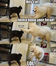 funny dog memes hilarious / funny dog memes ` funny dog memes hilarious ` funny dog memes humor ` funny dog memes videos ` funny dog memes puppies ` funny dog memes with captions ` funny dog memes hilarious laughing ` funny dog memes funniest animals Funny Dog Faces, Funny Dog Captions, Funny Animal Jokes, Funny Dog Videos, Cute Funny Animals, Funny Animal Pictures, Hilarious Memes, Cute Baby Animals, Funny Cute