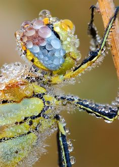 dewdrops on dragonfly.. wow!!