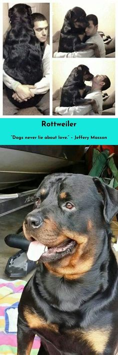 One reason a dog can be such a comfort when you're feeling blue is that he doesn't try to find out why. #rottweiler #rottweilerlove