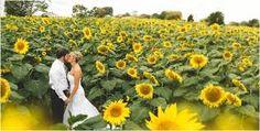 Resultado de imagem para decoracao de casamento girassol