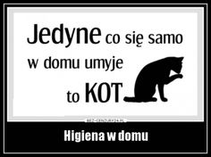 Higiena w domu Motto, Keep Smiling, Happy Campers, Photo Booth, Funny Pictures, Humor, Memes, Quotes, Blog