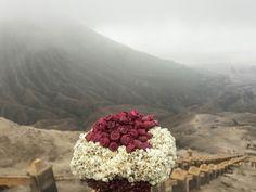 Edelweiss bromo montain semeru jawatimur indonesia edelweissbouqet