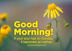 Good Morning Sunday Wishes Images Download - Good Morning Images, Quotes, Wishes, Messages, greetings & eCards Sunday Wishes Images, Good Morning Monday Images, Good Morning Friends Images, Good Morning Happy Sunday, Morning Pics, Morning Pictures, Good Morning Quotes, Happy Sunday Flowers, Wishes Messages