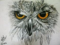 Image result for colour pencil drawing of owl eyes