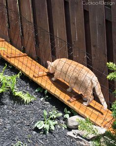 In this post I explain step-by-step how I built the outdoor cat tunnels leading from and to my outdoor cat enclosure in our yard. Cat tunnels are a great way to let your cats enjoy the outdoors even if you don't have the room for cat enclosures. Outdoor Cat Tunnel, Outdoor Cat Run, Diy Cat Enclosure, Outdoor Cat Enclosure, Reptile Enclosure, Cat Fence, Chesire Cat, Cat Cages, Cat Window