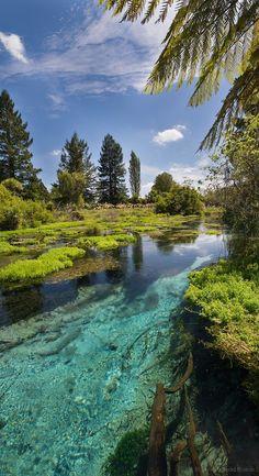 Hamurana Springs walkway, Rotorua, New Zealand.